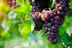 plan d'occupation des sols,préemption,espace naturel sensible,délibération,personnellement intéressé,vin,viticole,alsace